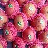 Shandong FUJI Apple Red Apple