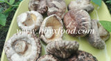 Fresh Organic Bulk Dried Tea Flower Mushrooms Vegetable