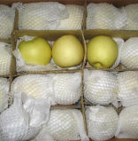 Chinese Golden Pear/Crown Pear Good Quality and Price