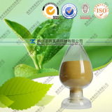 Factory Supply Suntheanine 10%-99% L-Theanine