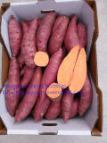 Organic Food Grade New Crop Sweet Potato
