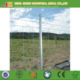 Hot-Dipped Galvanized Frame Finishing Y Type Post Star Picket Made in China