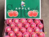 Golden Supplier of Chinese Origin (red: 90%) Fresh FUJI Apple