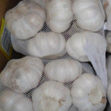2017 New Crop Small Mesh Bag Pcking White Garlic