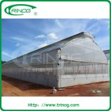 Economical plastic film greenhouse for hdyroponics
