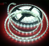 2year Warranty 3528SMD Flexible LED Strip Light