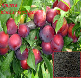 Natural Organic Soil Fertilizer From Bamboo Biochar