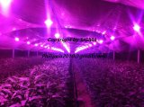 Sigma 18W 36W UV Fruit Vegetable Plant Growing Bulb LED Light for Indoor Plants