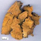 Polygonum Cuspidatum Extract
