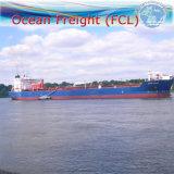 Ocean Freight FCL Shipping From Ningbo to Manzanillo (Mexico)