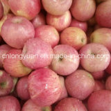Chinese Supplier for High Quality of Fresh Qinguan Apple