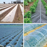 PE Mateial Plastic Garden Tunnel Film for Agriculture