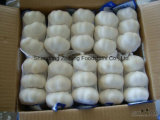 2017 New Crop Chinese Pure White Garlic