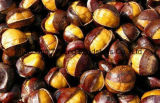 Fresh Delicious Chestnut for Exporting