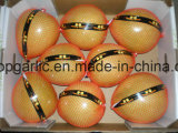 Fresh Xiamen Honey Pomelo of China