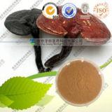 100% Natural Ganoderma Lucidum Extract Ganoderic Acid a