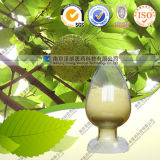 High Quality Natural Mulberry Bark Extract Morin Hydrate