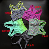 Fitness & Yoga Wear for Women, Lady Sports Bra, Sportswear