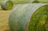 Qualified 1.27*3000m White Bale Wrap Net for New Zealand