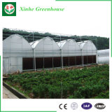 Hot Sale Single Tunnel Plastic Film Green House Supplier for Vegetable Growing
