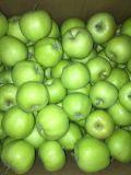 Top Quality Fresh Green Gala Apple Factory