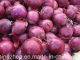5.0cm and up New Crop Fresh Red Onion