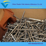 Common Nails for Construction Usage Iron Nails