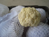 New Crop Good Quality Cauliflower for Exporting