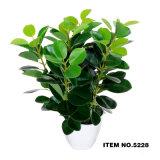Artificia. L Green Plant Bonsai 5228