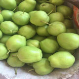 2017 New Crop Fresh Green Early Su Pear
