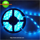 DC12V/24V Waterproof Flexible 5050SMD LED Strip (CE/RoHS Approval)