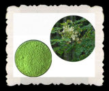 Competitive Price Moringa Powder Plant Extract Wholesale with High Quality