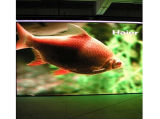 P6 LED Display Board for Rental