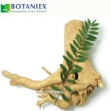 Natural Extract Tongkat Ali Extract Eurycomanone 0.5% with Free Samples