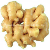 2017 New Crop Fresh Ginger
