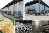 Climate Controller for Mushroom Cultivation Room