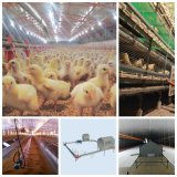 Prefabricated Chicken House with All Equipments