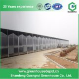 Hot Sale Commercial PC Sheet Hydroponic Greenhouse for Vegetable