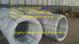 Steel Wire Rod with High Quality ASTM A29m 1008, 1010 GB 08f Hot Rolled
