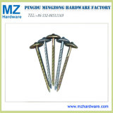 Umbrella Head Galvanized Roofing Nail From Factory