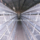 Automatic Chicken Cage Feeding and Drinking System