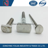Carbon Steel Square Head T Head Bolt