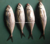 Frozen Big Eye Horse Mackerel