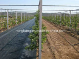 1.83m X 50m Black Weed Control Material for Agriculture