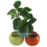 Stocked Color Round Shape Small Ceramic Flower Pot & Planter for Home Decoration