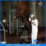 Moslem Cattle Abattoir Equipment for Cattle Slaughter Houses