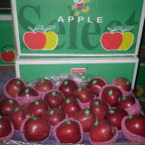 2014 Crop Hot Selling Huaniu Apple