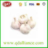 2017 Pure White Garlic with Competitive Pric
