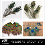 Natural Color Peacock Feather with Eye (RT018)