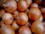 Fresh Yellow / Red Onion (5-7cm, 6-8cm, 7-9cm)